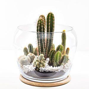 گلدان شیشهای کاکتوس