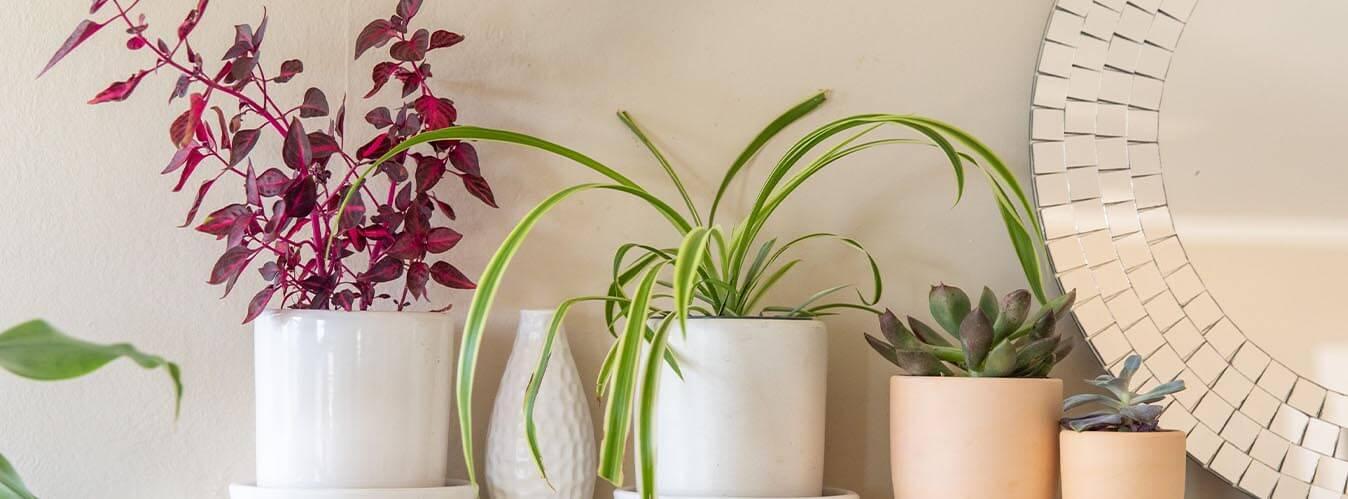 طراحی دکوراسیون خانه با گیاه