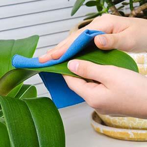 مراقبت از گیاهان آپارتمانی