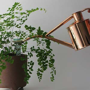 آبیاری گیاه آپارتمانی