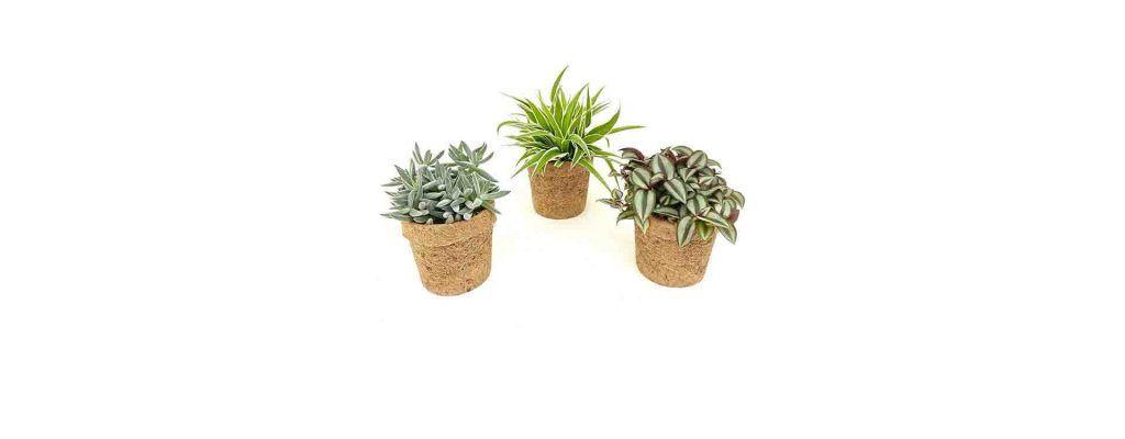 گیاهان مناسب آپارتمان با نور کم