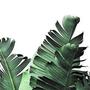 برگ گیاهان آپارتمانی