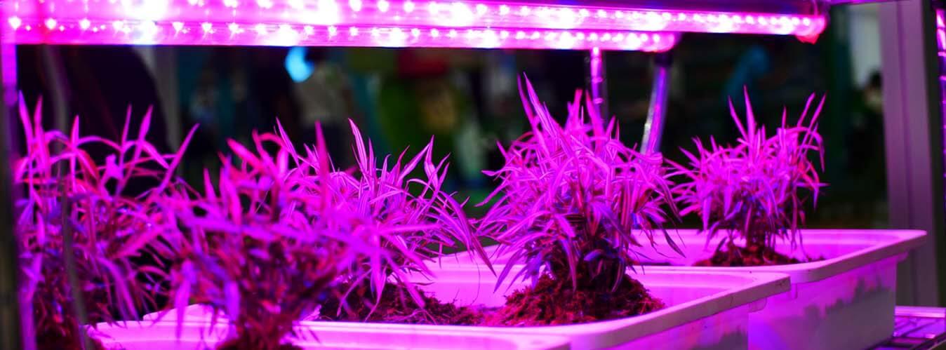نور مصنوعی برای گیاهان