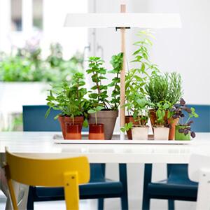 پرورش گیاهان با نور مصنوعی