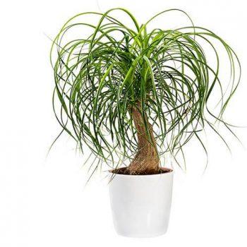 نگهداری گیاه لیندا