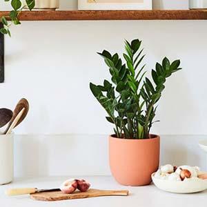 تغذیه گیاهان آپارتمانی