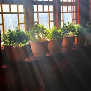 نور مناسب گیاهان آپارتمانی