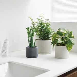 انتخاب گلدان گیاهان آپارتمانی