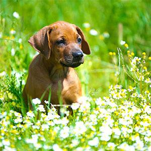 گیاهان سمی برای حیوانات