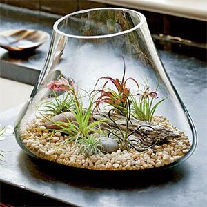 باغ شیشهای یا تراریوم