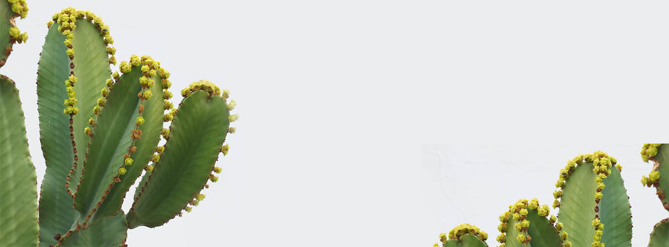 افوربیا اینگنس