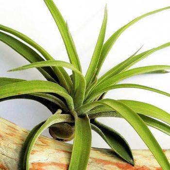 نگهداری گیاهان هوازی