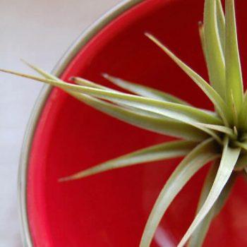 آبیاری گیاهان هوازی